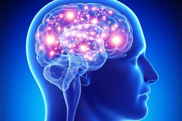 استفاده از ارگانوئیدها برای درمان طیف اوتیسم